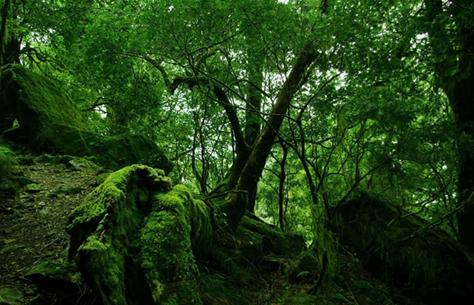 deepforest.jpg