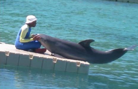 dolphineersdock.jpg