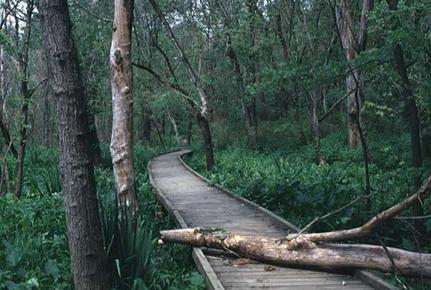 swampbridge.jpg