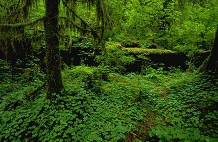 wildforestpath.jpg