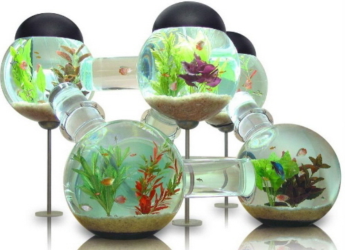 aquarium%20habitat.jpg