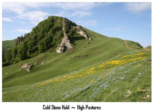 cs_pasture.jpg